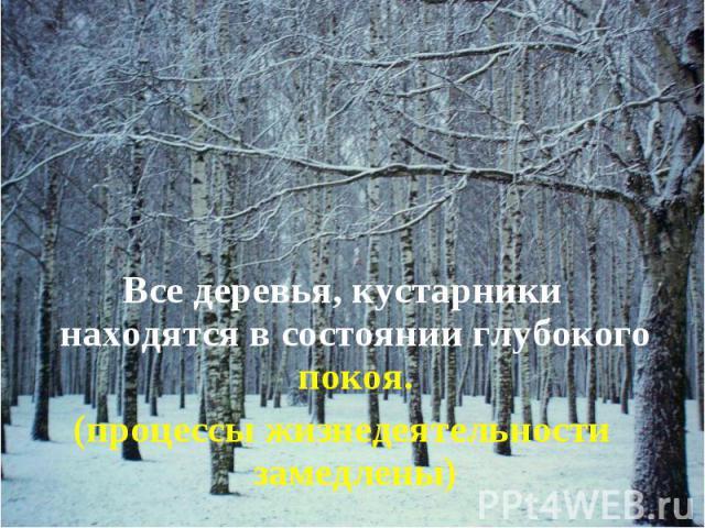 Все деревья, кустарники находятся в состоянии глубокого покоя. Все деревья, кустарники находятся в состоянии глубокого покоя. (процессы жизнедеятельности замедлены)