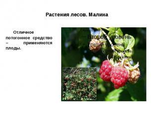 Растения лесов. Малина Отличное потогонное средство – применяются плоды.