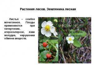 Растения лесов. Земляника лесная Листья – слабое мочегонное. Плоды применяются п