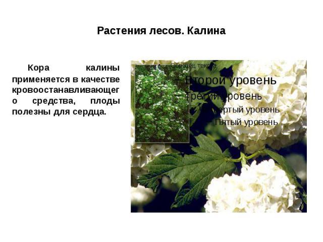 Растения лесов. Калина Кора калины применяется в качестве кровоостанавливающего средства, плоды полезны для сердца.
