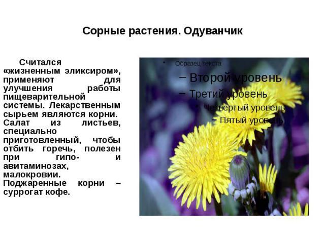 Сорные растения. Одуванчик Считался «жизненным эликсиром», применяют для улучшения работы пищеварительной системы. Лекарственным сырьем являются корни. Салат из листьев, специально приготовленный, чтобы отбить горечь, полезен при гипо- и авитаминоза…