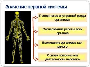 Значение нервной системы Постоянство внутренней среды организма