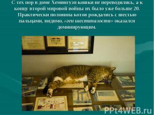 С тех пор в доме Хемингуэя кошки не переводились, а к концу второй мировой войны