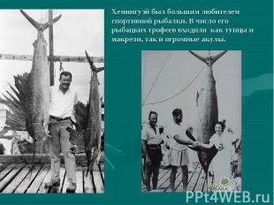 Хемингуэй был большим любителем спортивной рыбалки. В число его рыбацких трофеев