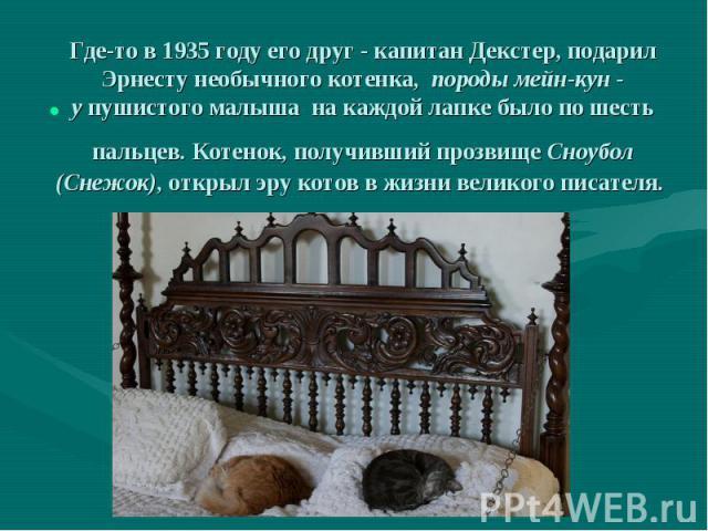 Где-то в 1935 году его друг - капитан Декстер, подарил Эрнесту необычного котенка, породы мейн-кун - упушистого малыша на каждой лапке было по шесть пальцев. Котенок, получивший прозвище Сноубол (Снежок), открыл эру котов в жизни в…