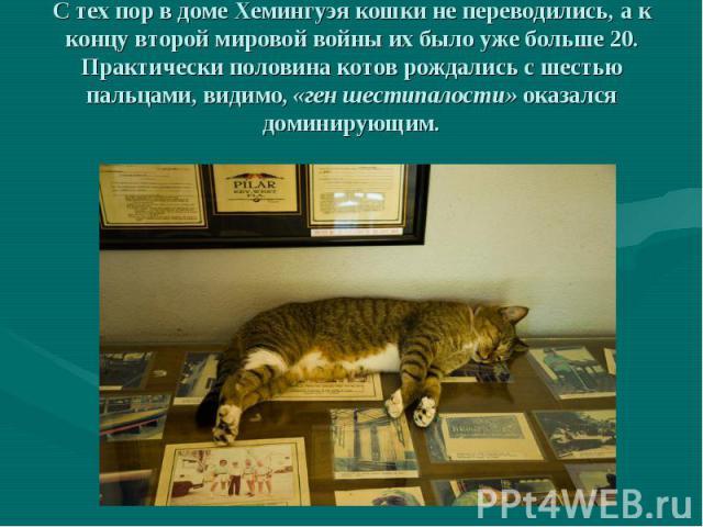 С тех пор в доме Хемингуэя кошки не переводились, а к концу второй мировой войны их было уже больше 20. Практически половина котов рождались с шестью пальцами, видимо, «ген шестипалости» оказался доминирующим.