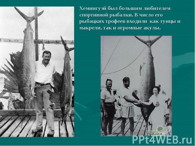 Хемингуэй был большим любителем спортивной рыбалки. В число его рыбацких трофеев входили как тунцы и макрели, так и огромные акулы.