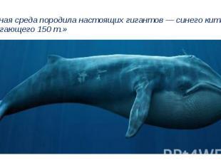 «..Водная среда породила настоящих гигантов — синего кита, достигающего 150 т.»