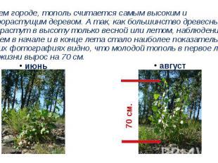 В нашем городе, тополь считается самым высоким и быстрорастущим деревом. А так,