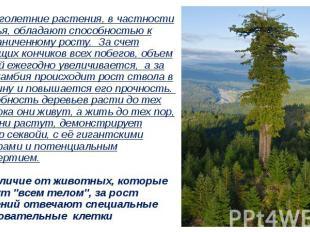…Многолетние растения, в частности деревья, обладают способностью к неограниченн