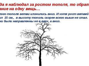 …Когда я наблюдал за ростом тополя, то обратил внимание на одну вещь… У взрослог