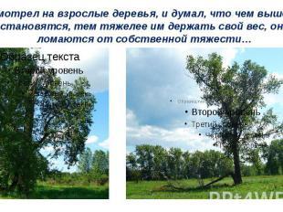 Я смотрел на взрослые деревья, и думал, что чем выше они становятся, тем тяжелее