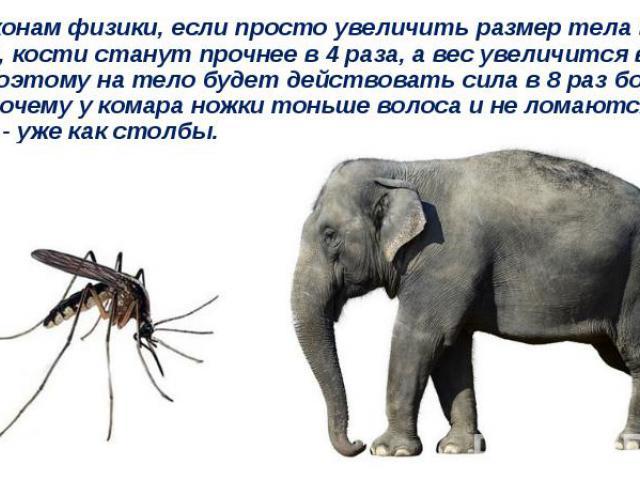 По законам физики, если просто увеличить размер тела в 2 раза, кости станут прочнее в 4 раза, а вес увеличится в 8 раз. Поэтому на тело будет действовать сила в 8 раз больше. Вот почему у комара ножки тоньше волоса и не ломаются, а у слона - уже как…