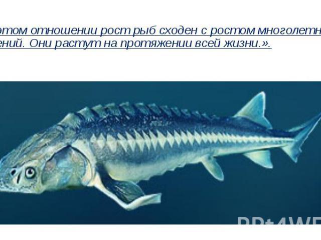 «…В этом отношении рост рыб сходен с ростом многолетних растений. Они растут на протяжении всей жизни.».