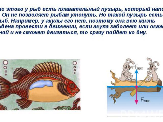 Помимо этого у рыб есть плавательный пузырь, который наполнен газом. Он не позволяет рыбам утонуть. Но такой пузырь есть не у всех рыб. Например, у акулы его нет, поэтому она всю жизнь вынуждена провести в движении, если акула заболеет или окажется …