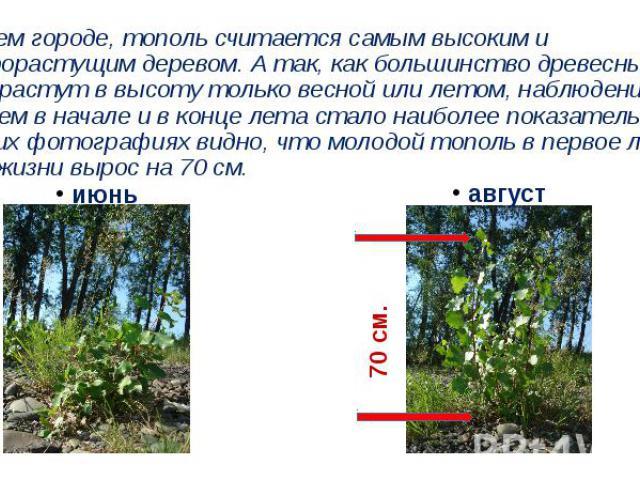 В нашем городе, тополь считается самым высоким и быстрорастущим деревом. А так, как большинство древесных пород растут в высоту только весной или летом, наблюдение за тополем в начале и в конце лета стало наиболее показательным. На этих фотографиях …