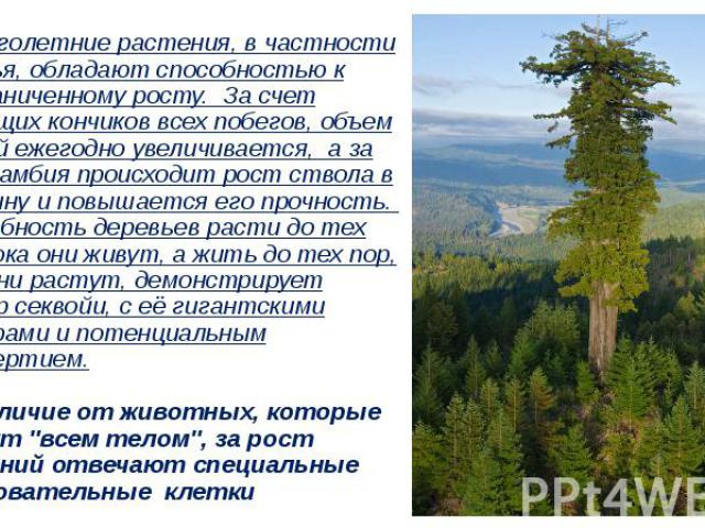 …Многолетние растения, в частности деревья, обладают способностью к неограниченному росту. За счет растущих кончиков всех побегов, объем ветвей ежегодно увеличивается, а за счет камбия происходит рост ствола в толщину и повышается его прочность. Спо…