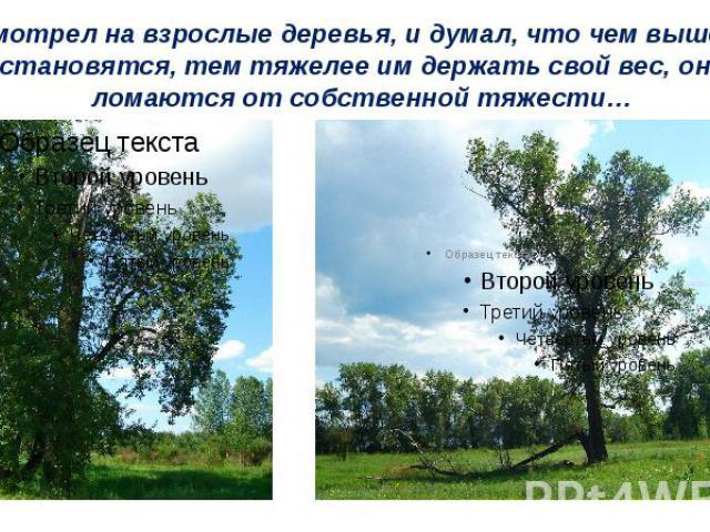 Я смотрел на взрослые деревья, и думал, что чем выше они становятся, тем тяжелее им держать свой вес, они ломаются от собственной тяжести…