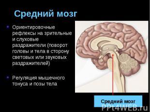 Средний мозг Ориентировочные рефлексы на зрительные и слуховые раздражители (пов