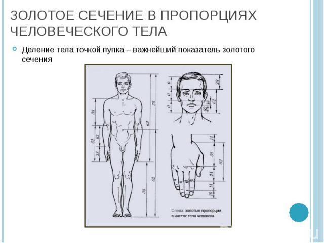 Деление тела точкой пупка – важнейший показатель золотого сечения Деление тела точкой пупка – важнейший показатель золотого сечения