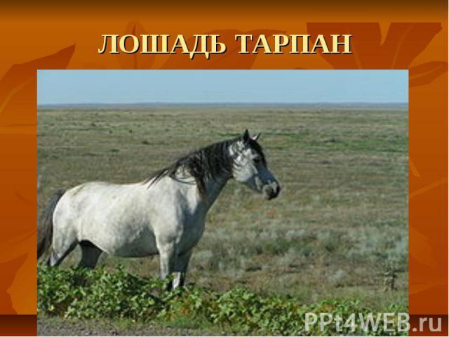 ЛОШАДЬ ТАРПАН
