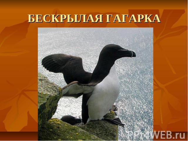 БЕСКРЫЛАЯ ГАГАРКА