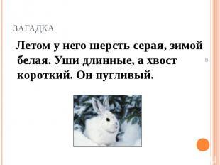Летом у него шерсть серая, зимой белая. Уши длинные, а хвост короткий. Он пуглив