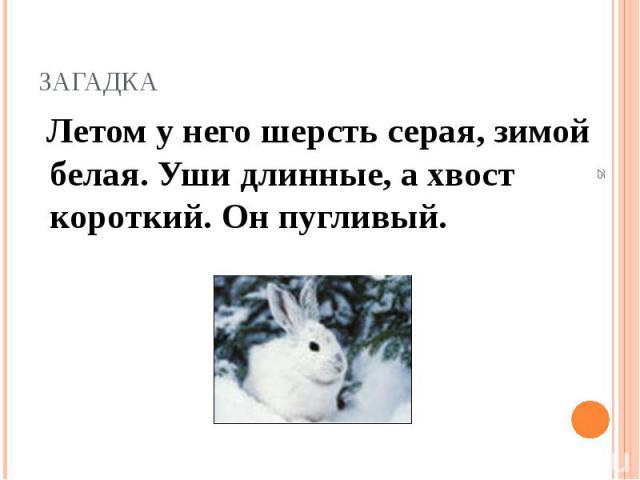 Летом у него шерсть серая, зимой белая. Уши длинные, а хвост короткий. Он пугливый. Летом у него шерсть серая, зимой белая. Уши длинные, а хвост короткий. Он пугливый.