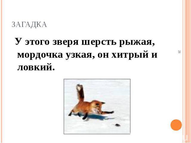У этого зверя шерсть рыжая, мордочка узкая, он хитрый и ловкий. У этого зверя шерсть рыжая, мордочка узкая, он хитрый и ловкий.