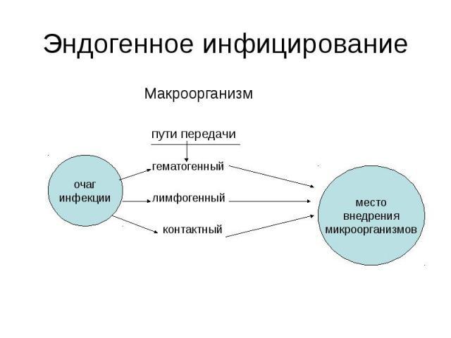Эндогенное инфицирование Макроорганизм пути передачи гематогенный лимфогенный контактный