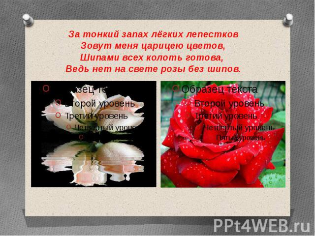 За тонкий запах лёгких лепестков Зовут меня царицею цветов, Шипами всех колоть готова, Ведь нет на свете розы без шипов.