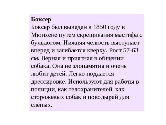 Боксер Боксер был выведен в 1850 году в Мюнхене путем скрещивания мастифа с бульдогом. Нижняя челюсть выступает вперед и загибается кверху. Рост 57-63 см. Верная и приятная в общении собака. Она не злопамятна и очень любит детей. Легко поддается дре…