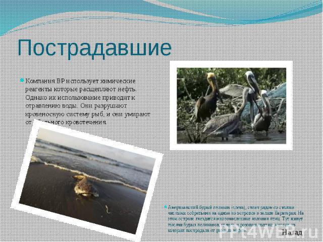 Пострадавшие Компания BP использует химические реагенты которые расщепляют нефть. Однако их использование приводит к отравлению воды. Они разрушают кровеносную систему рыб, и они умирают от обильного кровотечения.