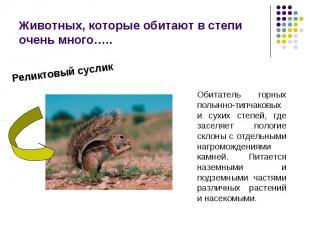 Животных, которые обитают в степи очень много…..