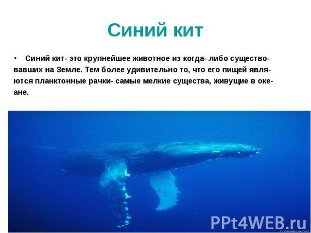 Синий кит- это крупнейшее животное из когда- либо существо- Синий кит- это крупнейшее животное из когда- либо существо- вавших на Земле. Тем более удивительно то, что его пищей явля- ются планктонные рачки- самые мелкие существа, живущие в оке- ане.