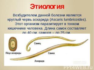 Этиология Возбудителем данной болезни является круглый червь аскарида (Ascaris l