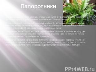 Папоротниковые растения или папоротники чаще растут в тенистых влажных лесах и н