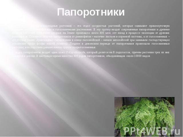 Папоротники Папоротники (папоротниковидные растения) – это отдел сосудистых растений, которые занимают промежуточную позицию между риниофитами и голосеменными растениями. В эту группу входят современные папоротники и древние высшие растения, появлен…