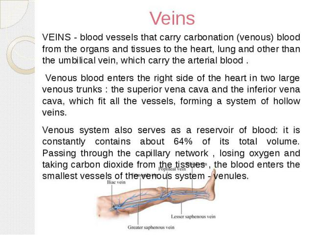 Veins VEINS - blood vessels that carry carbonation (venous) blood from the organs and tissues to the heart, lung and other than the umbilical vein, which carry the arterial blood . Venous blood enters the right side of the heart in two large venous …