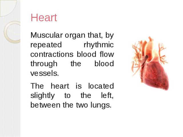 Heart Muscular organ that, by repeated rhythmic contractions blood flow through the blood vessels. The heart is located slightly to the left, between the two lungs.