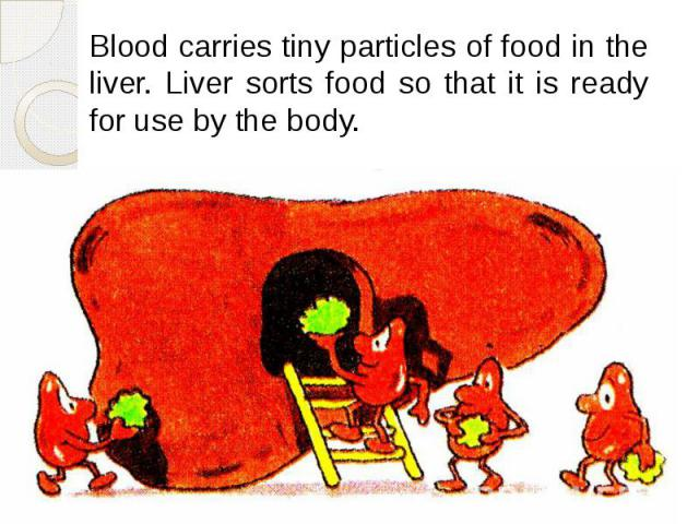 Blood carries tiny particles of food in the liver. Liver sorts food so that it is ready for use by the body. Blood carries tiny particles of food in the liver. Liver sorts food so that it is ready for use by the body.