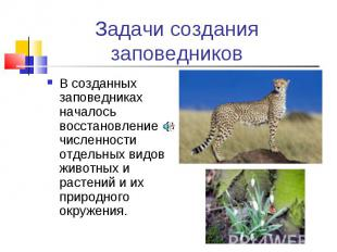 В созданных заповедниках началось восстановление численности отдельных видов жив