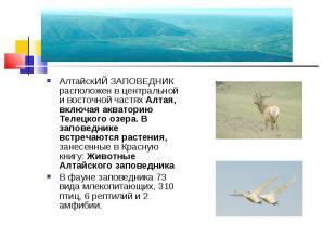 АлтайскИЙ ЗАПОВЕДНИК расположен в центральной и восточной частях Алтая, включая