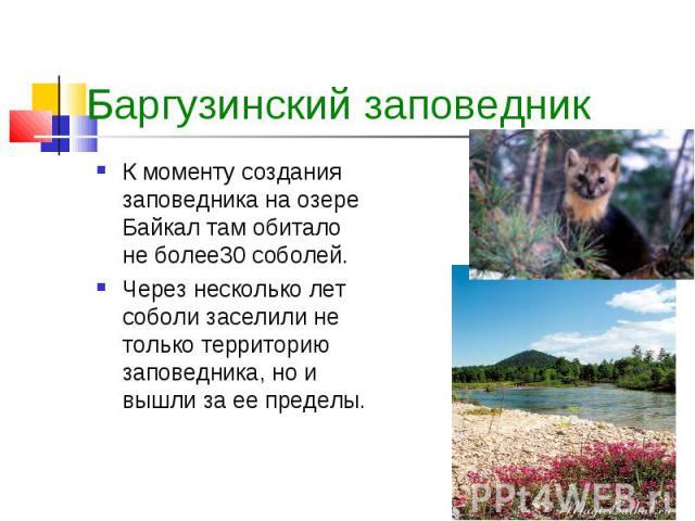 К моменту создания заповедника на озере Байкал там обитало не более30 соболей. К моменту создания заповедника на озере Байкал там обитало не более30 соболей. Через несколько лет соболи заселили не только территорию заповедника, но и вышли за ее пределы.