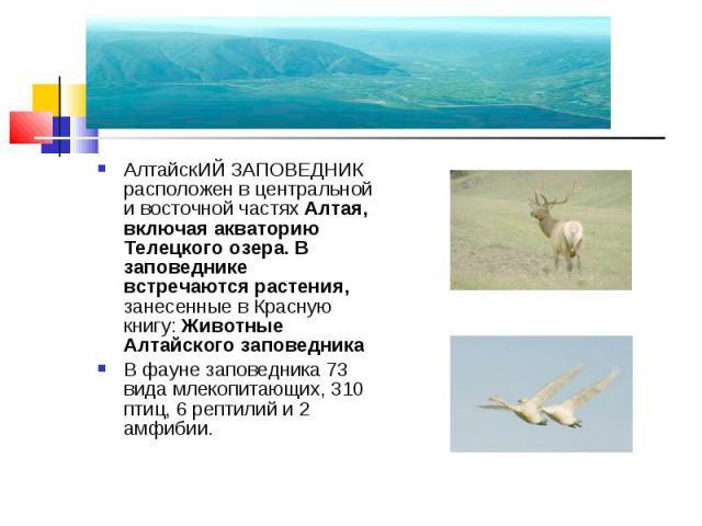 АлтайскИЙ ЗАПОВЕДНИК расположен в центральной и восточной частях Алтая, включая акваторию Телецкого озера. В заповеднике встречаются растения, занесенные в Красную книгу: Животные Алтайского заповедника АлтайскИЙ ЗАПОВЕДНИК расположен в центральной …