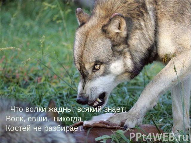 Что волки жадны, всякий знает: Волк, евши, никогда Костей не разбирает. Что волки жадны, всякий знает: Волк, евши, никогда Костей не разбирает.