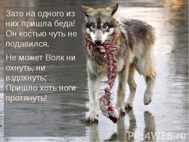 Зато на одного из них пришла беда! Он костью чуть не подавился. Зато на одного из них пришла беда! Он костью чуть не подавился. Не может Волк ни охнуть, ни вздохнуть; Пришло хоть ноги протянуть!