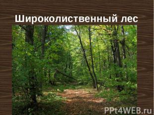 Широколиственный лес