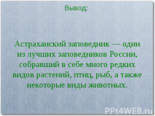 Астраханский заповедник — один из лучших заповедников России, собравший в себе м