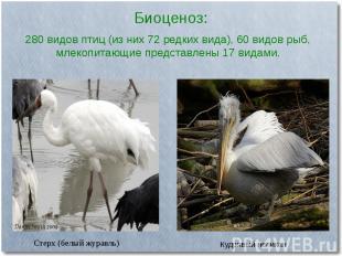 Биоценоз:Стерх (белый журавль)